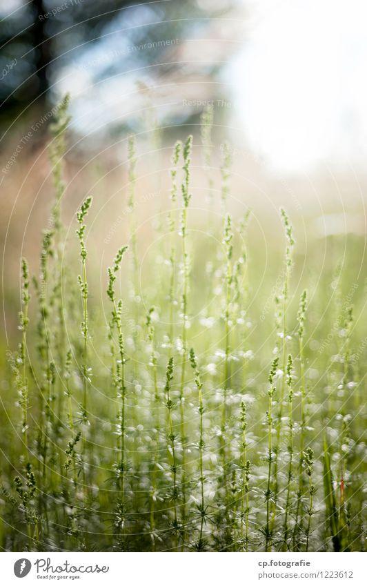 In der Sonne... Pflanze grün Sommer Gras natürlich Schönes Wetter