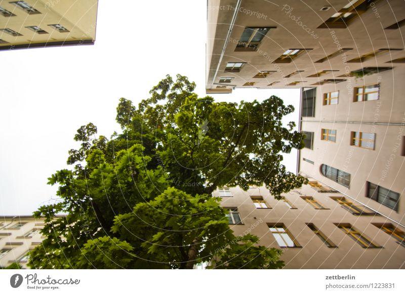 Baum im Hinterhof Himmel Natur Stadt Sommer Haus Fenster Berlin Fassade Stadtleben Textfreiraum Wohnhaus Hauptstadt Wohnhochhaus Etage Plattenbau
