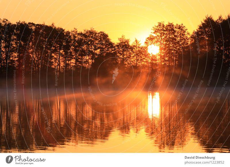 4:46 Ferien & Urlaub & Reisen Sommerurlaub Landschaft Wolkenloser Himmel Frühling Herbst Schönes Wetter Baum Wellen Küste Seeufer Flussufer gelb orange schwarz