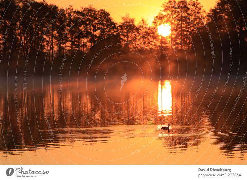 Morgenstund... Himmel Natur Ferien & Urlaub & Reisen Pflanze Sommer Baum Erholung rot Landschaft Ferne Winter gelb Wärme Frühling Herbst Küste