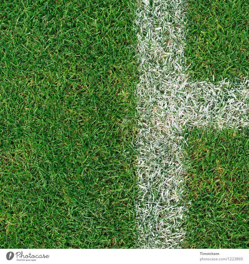 Jenseits der Linien. Sport Fußballplatz Gras Schilder & Markierungen ästhetisch Sauberkeit grün weiß deutlich Rasen Farbfoto Außenaufnahme Menschenleer Tag