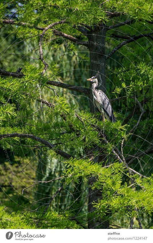 Tierisch gut: Reiher Natur schön Baum Vogel Wildtier Überblick