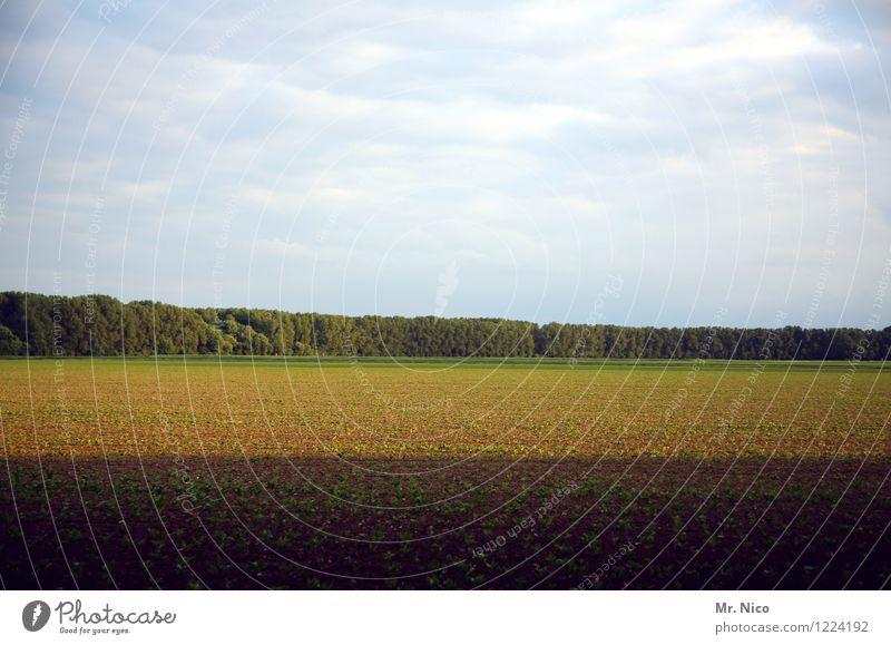 Boden- und Ackertag | ernte gut, alles gut Umwelt Natur Landschaft Erde Himmel Wolken Pflanze Baum Feld Wald Wachstum Ernte grün braun natürlich Landwirtschaft