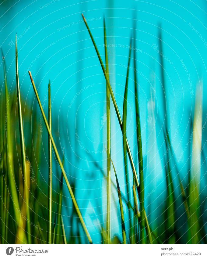 Binsen Natur Pflanze Umwelt Küste Gras Blüte Hintergrundbild Blühend Seeufer Kräuter & Gewürze Flussufer Schilfrohr Umweltschutz Halm Röhricht Biotop