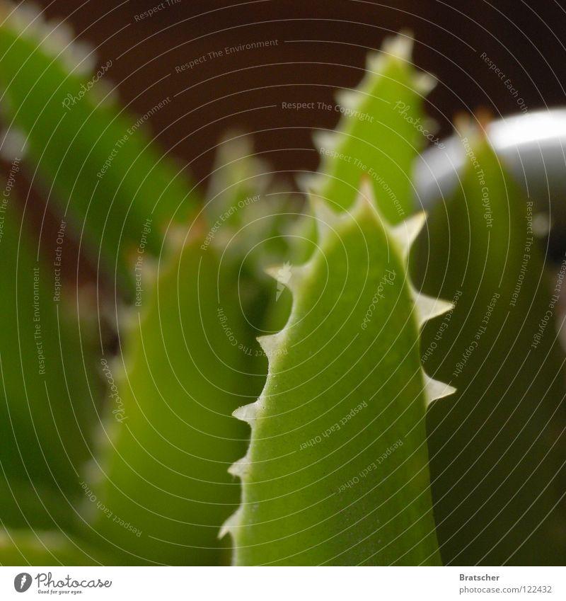 """""""Allein gegen alle"""" mit Hans Rosenthal Natur grün Pflanze Einsamkeit Wüste Wissenschaften Wut Mut dick Märchen Drache selbstbewußt Ärger Selbstständigkeit Dorn"""