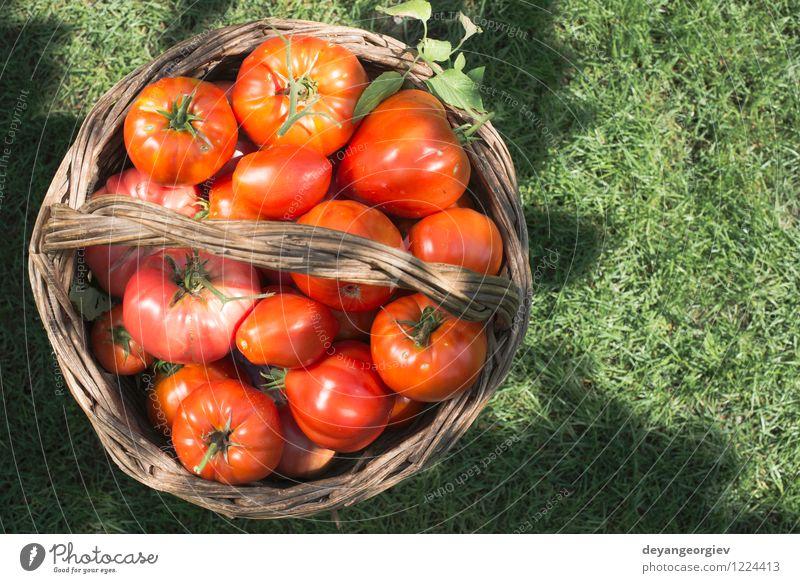 Tomaten im hölzernen Korb auf grüner Wiese. Natur Pflanze Sommer Sonne rot Blatt natürlich Essen Garten Menschengruppe Frucht frisch groß Gemüse Ernte