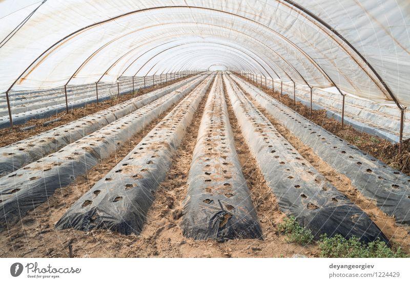 Gewächshaus ohne Pflanzen Gemüse Garten Gartenarbeit Industrie Business Natur Wachstum grün Perspektive Ackerbau Kinderzimmer Bauernhof Gartenbau