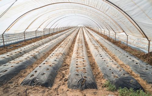 Natur Pflanze grün Garten Business Wachstum Perspektive Industrie Gemüse Ernte Bauernhof Ackerbau Botanik Gartenarbeit organisch Gartenbau