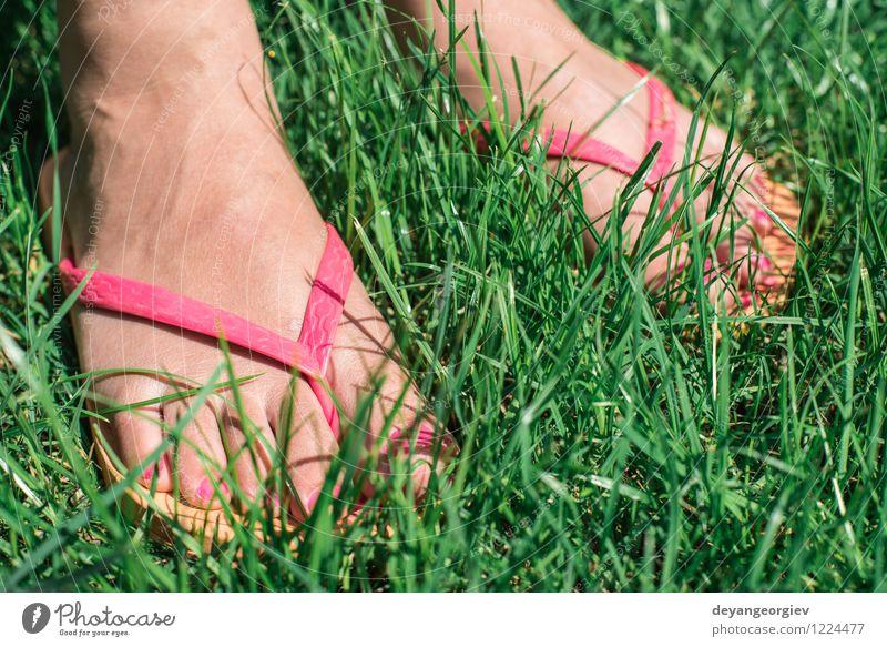 Füße auf der grünen Wiese Mensch Frau Natur schön Sommer weiß Erholung Blume Freude Mädchen Erwachsene Umwelt Gras natürlich