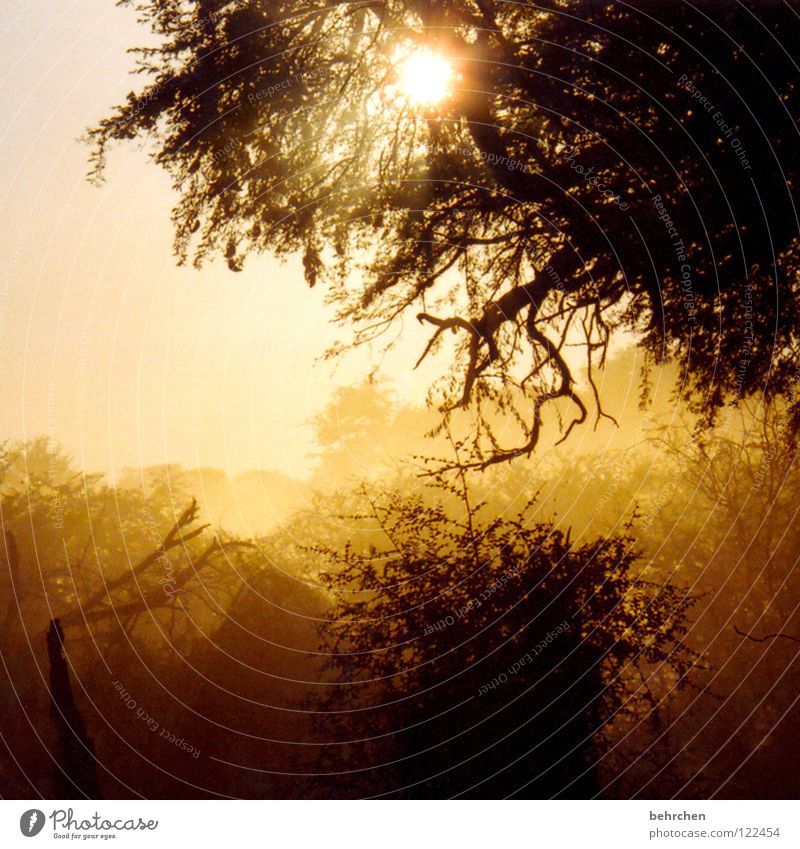eingestaubt Baum Sonne Ferien & Urlaub & Reisen ruhig Ferne Freiheit Sand Luft Zufriedenheit gefährlich bedrohlich außergewöhnlich Sehnsucht Schutz Afrika Mut