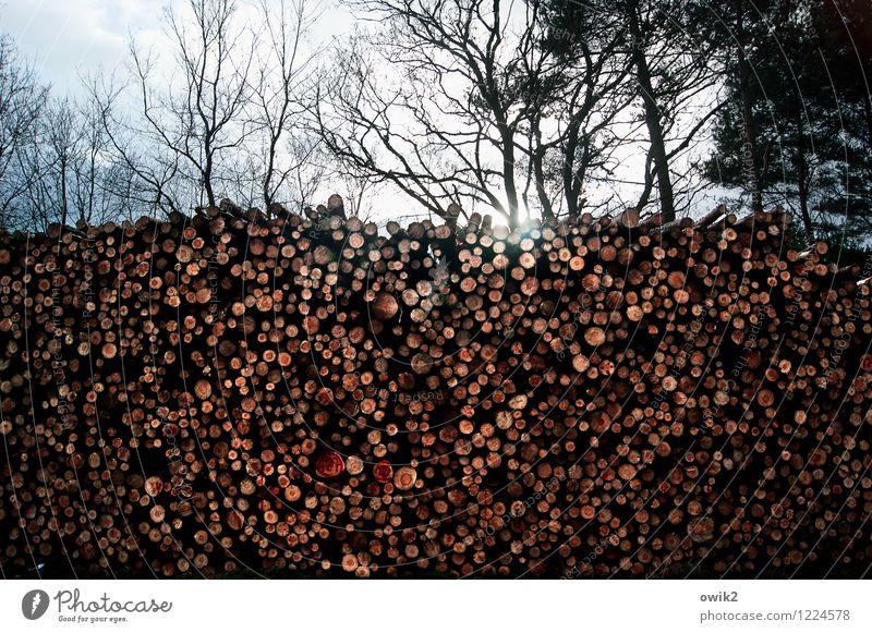 Schnittmenge Umwelt Natur Himmel Wolken Schönes Wetter Baum Wildpflanze Baumstamm Stapel Abholzung Wald gigantisch groß hoch rund viele Masse Menge Farbfoto