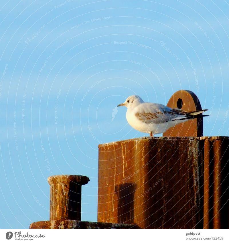 noch ne Möwe Himmel blau ruhig Einsamkeit Erholung Zufriedenheit Vogel warten sitzen Frieden Hafen Sehnsucht Rost Fernweh Schnabel