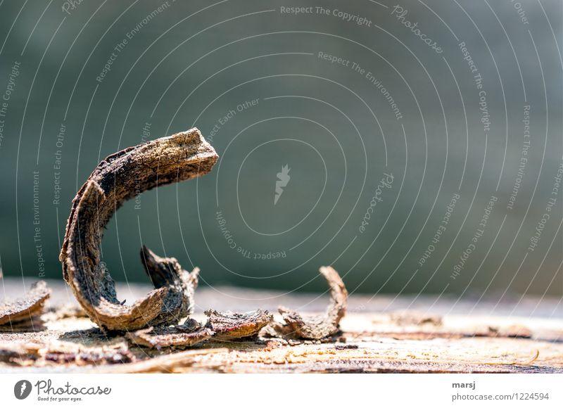 6 gekrümmt Holz Bogen alt drehen einfach elegant klein niedlich braun Einsamkeit Kunst verwittert Biegung skuril Farbfoto Gedeckte Farben Außenaufnahme