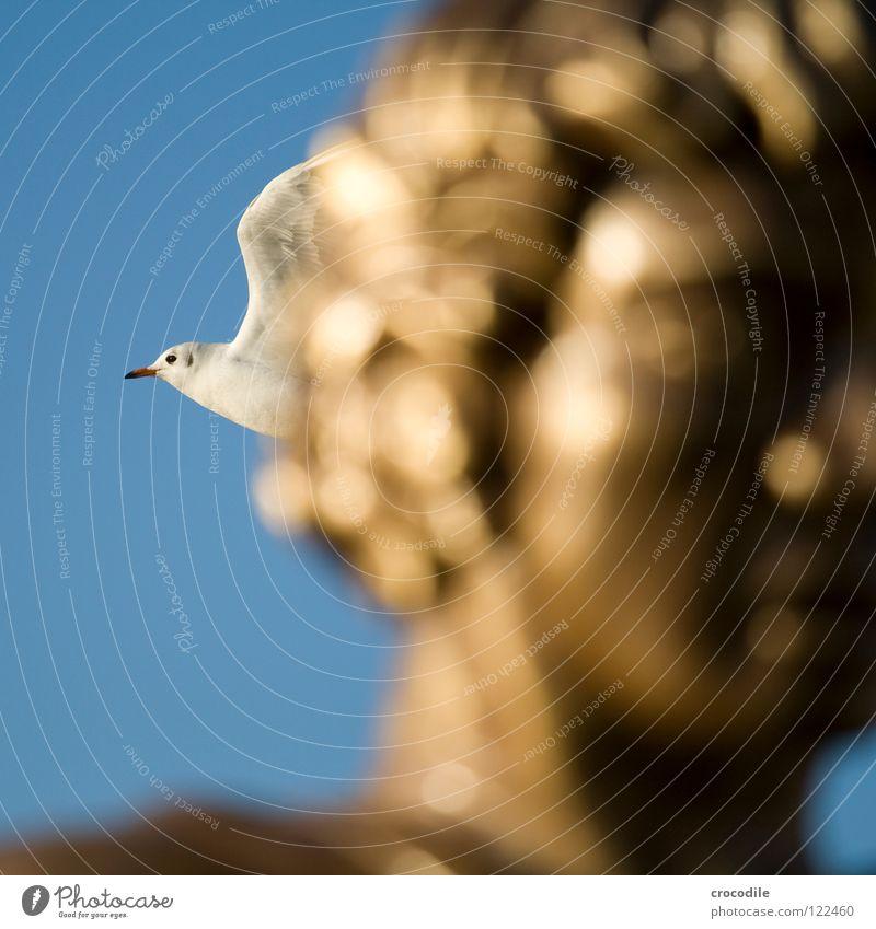möwenportrait Schärding Möwe Unschärfe Schnabel schlagen Vogel fliegen Kopf Haare & Frisuren gold Flügel Freiheit Himmel blau Feder