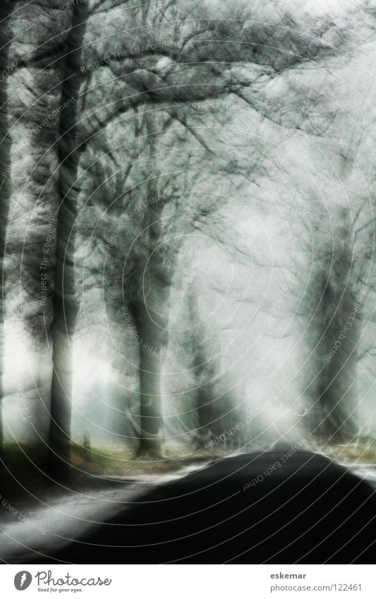 Allee im Winter Brandenburg Raureif schwarz Unschärfe Kunst Baum kalt weiß Dezember Eis gefroren filigran Geäst Januar Wintertag Verkehr Fahrbahn