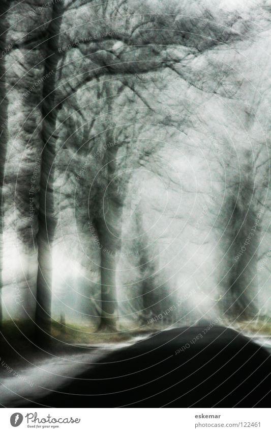 Allee im Winter Natur Himmel weiß Baum Ferien & Urlaub & Reisen schwarz Ferne Straße kalt Schnee träumen Eis Kunst Nebel Wetter