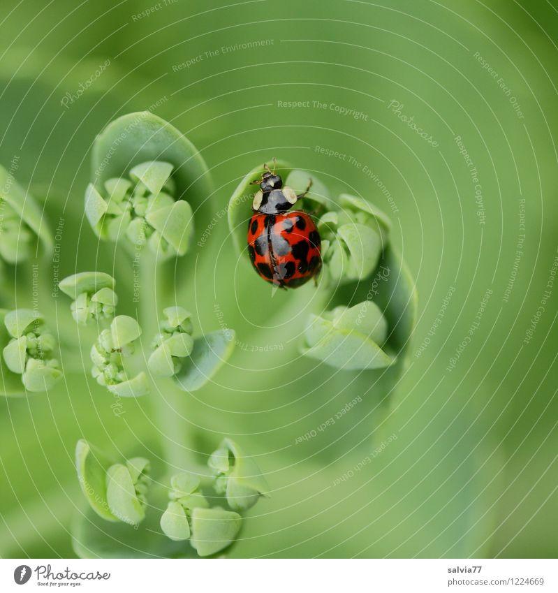 Blick von oben Gesundheit Wohlgefühl Sinnesorgane ruhig Natur Pflanze Tier Frühling Sommer Blatt Grünpflanze Garten Wildtier Käfer 1 entdecken Erholung genießen