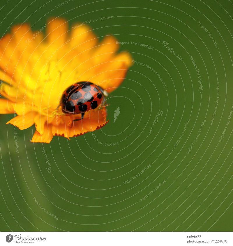 like orange Natur Pflanze grün Sommer Blume Tier Umwelt Leben Blüte Wiese Glück klein Garten oben Zufriedenheit