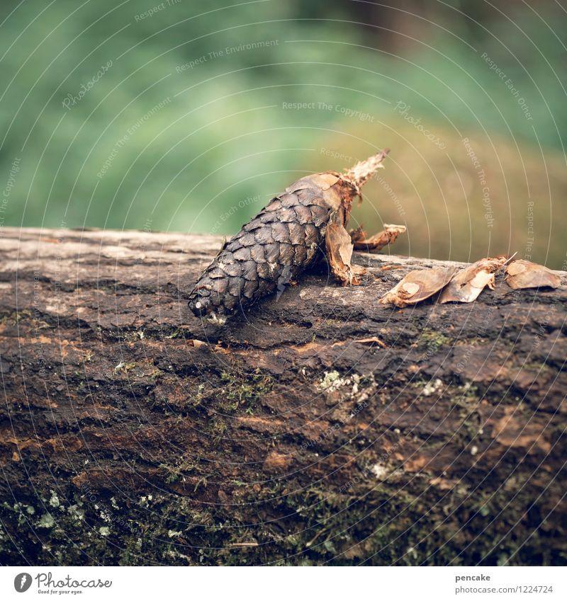 das schuppentier Natur Sommer Freude Tier Wald sitzen beobachten Baumstamm Baumrinde Schuppen Tannenzapfen hockend sprunghaft
