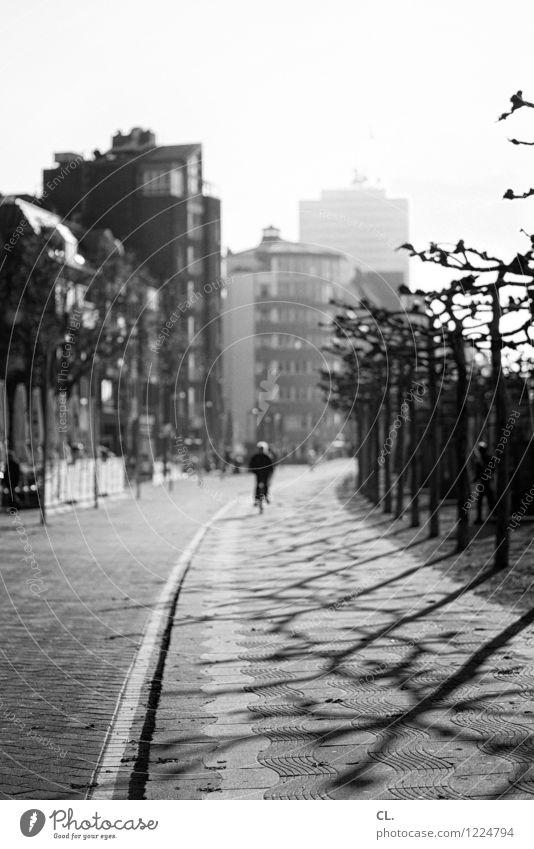 promenade Stadt Baum Haus Straße Herbst Wege & Pfade Freizeit & Hobby Fahrrad Verkehr Fahrradfahren Schönes Wetter Verkehrswege Städtereise Düsseldorf