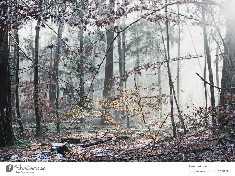 Im Rampenlicht | Die Naturbühne. Umwelt Pflanze Winter Schönes Wetter Eis Frost Wald ästhetisch hell kalt braun gold schwarz weiß Gefühle Blatt Farbfoto