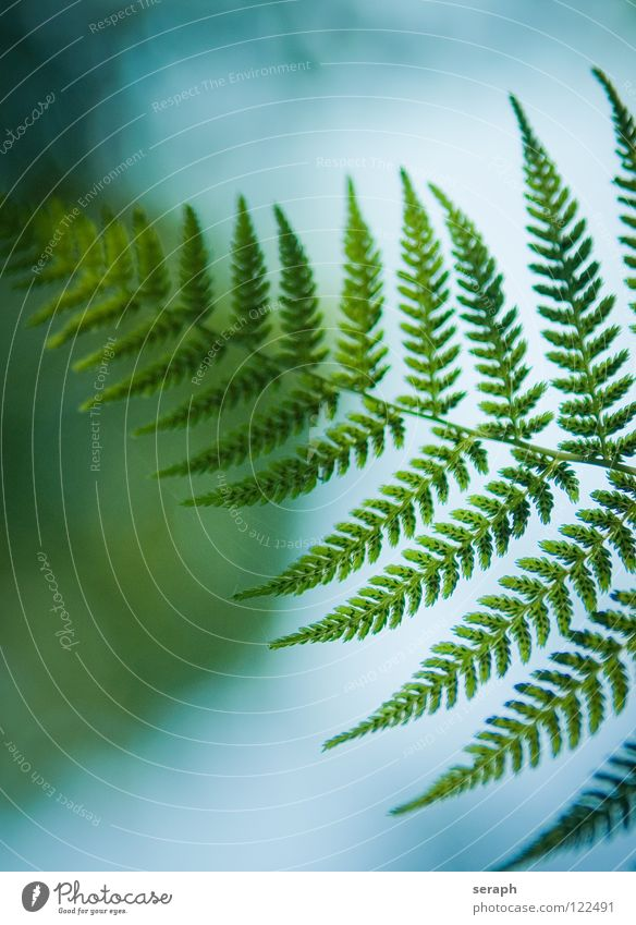 Farnwedel Natur grün Pflanze Blatt natürlich Wachstum frisch Stengel Botanik filigran Blattgrün Farn Sporen Echte Farne organisch gefiedert
