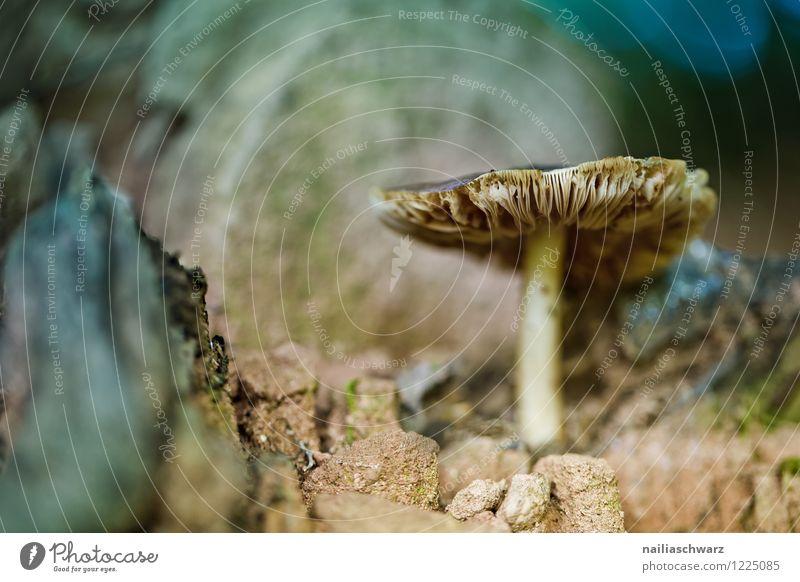 Pilze im Herbstwald Umwelt Natur Pflanze Moos Wald Wachstum schön natürlich wild blau gelb friedlich Einsamkeit waldpilz boden herbstlich feucht Farbfoto