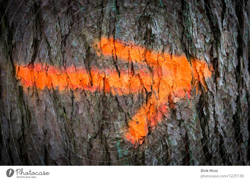 Bitte dort entlang Umwelt Natur Pflanze Baum Zeichen Schriftzeichen Schilder & Markierungen Hinweisschild Warnschild außergewöhnlich einzigartig braun orange