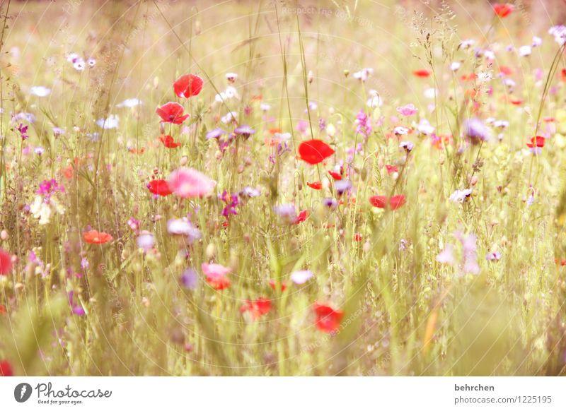 falscher tag, egal! Natur Pflanze schön Sommer Blume rot Blatt Blüte Frühling Wiese Gras Garten rosa Park Wachstum frisch