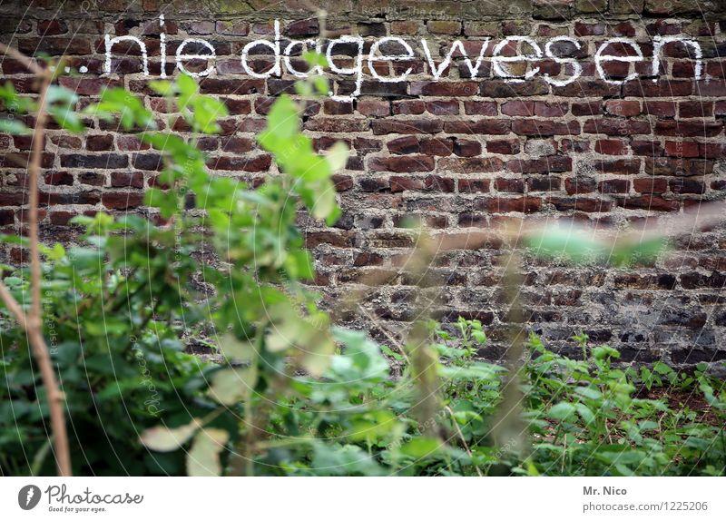 nee , is klar | UT Köln Pflanze Sträucher Blatt Garten Park Mauer Wand grün nie Grafik u. Illustration Schriftzeichen Buchstaben Aussage aussagekräftig