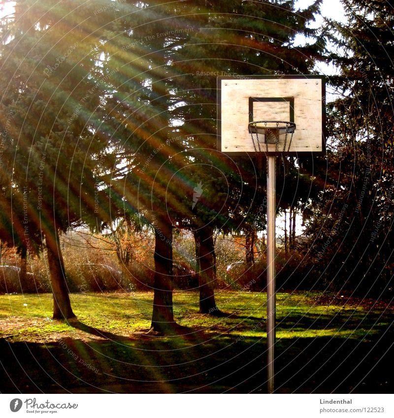Bermuda Ball Baum Sonne Sport Spielen Beleuchtung 3 Tanne Korb Dreieck Basketballkorb