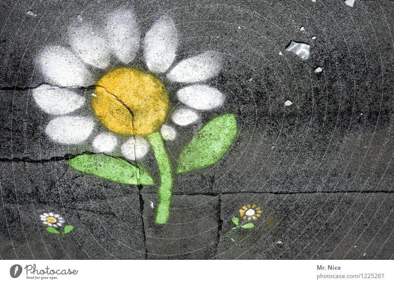 blom un blömcher Pflanze Blume Wege & Pfade gelb grau grün weiß Freude Glück Zufriedenheit Frühlingsgefühle Gänseblümchen Mauerpflanze Asphalt Stengel