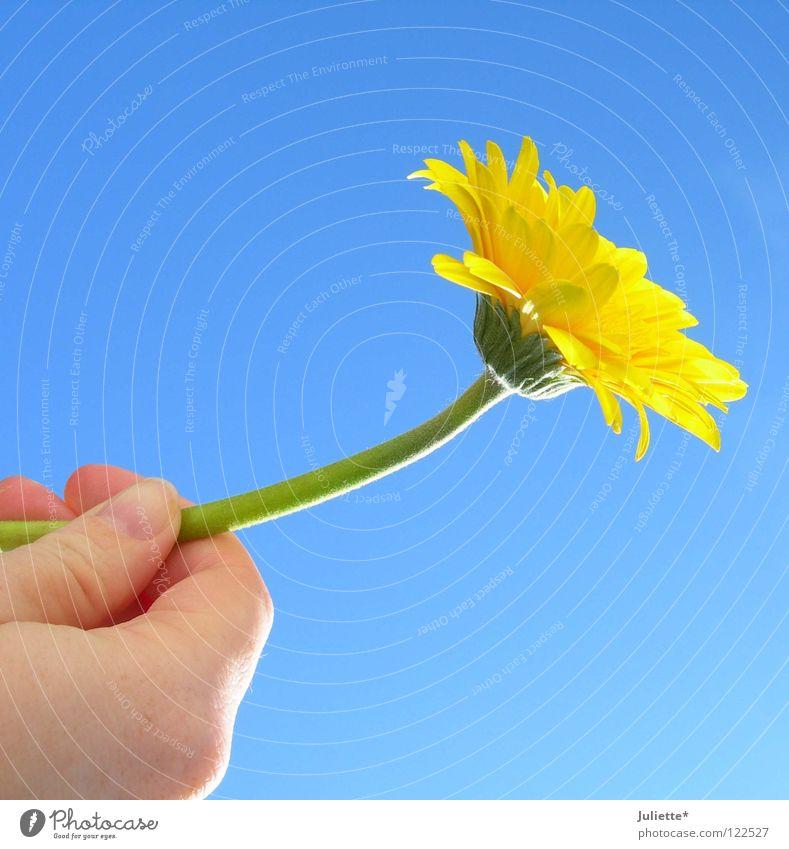 Für DICH II Hand schön Himmel Blume grün Sommer gelb Stil Luft Geburtstag festhalten Blühend