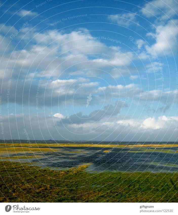 nordsee Natur Wasser Himmel Sonne Meer Strand Ferien & Urlaub & Reisen Wolken Herbst Wiese Gras Landschaft Küste Wind Sturm Leidenschaft