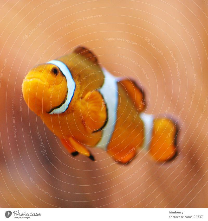 lost again Aquarium Pflanze Zoo Bahamas Korallen tauchen Clownfisch Makroaufnahme Nahaufnahme Fisch Seaworld Aquazoo fish Wasser Urwald Kuba coral water