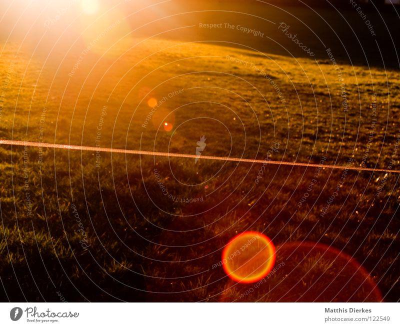 Fields of gold Natur grün schön rot Sonne gelb dunkel Wiese kalt Wärme Gras hell orange rosa Klima