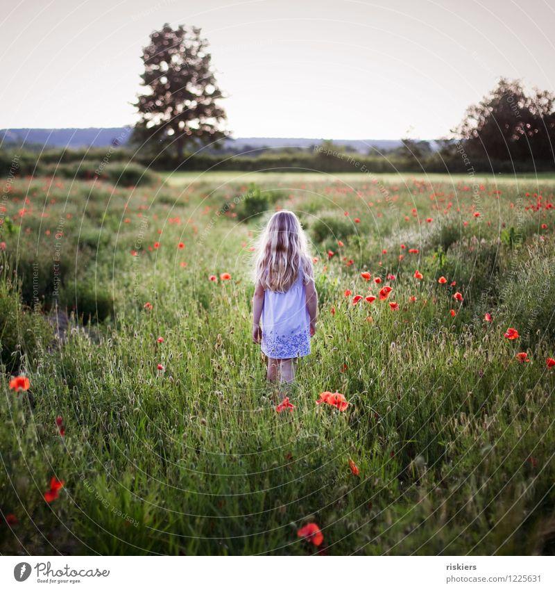 im Mohnfeld Mensch Kind Natur Pflanze Sommer Erholung Blume Einsamkeit ruhig Mädchen Umwelt Traurigkeit Frühling natürlich feminin gehen