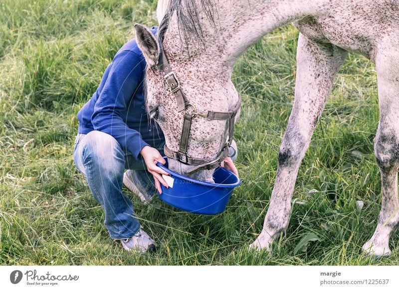 Pferde - Leckerli Mensch Frau Jugendliche blau grün Junge Frau Tier Erwachsene Liebe Wiese Gras feminin Zufriedenheit lecker Fell
