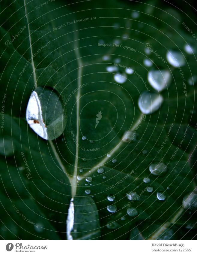 Klare Tropfen Pflanze blau grün Wasser Blatt Wiese Regen Feld Wassertropfen Klarheit Gewitter Nähgarn Lupe dunkelgrün