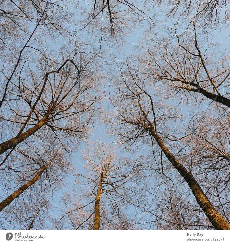 Enting Himmel Baum blau Winter Ast aufwärts Baumstamm Schönes Wetter erleuchten Verabredung Skelett filigran