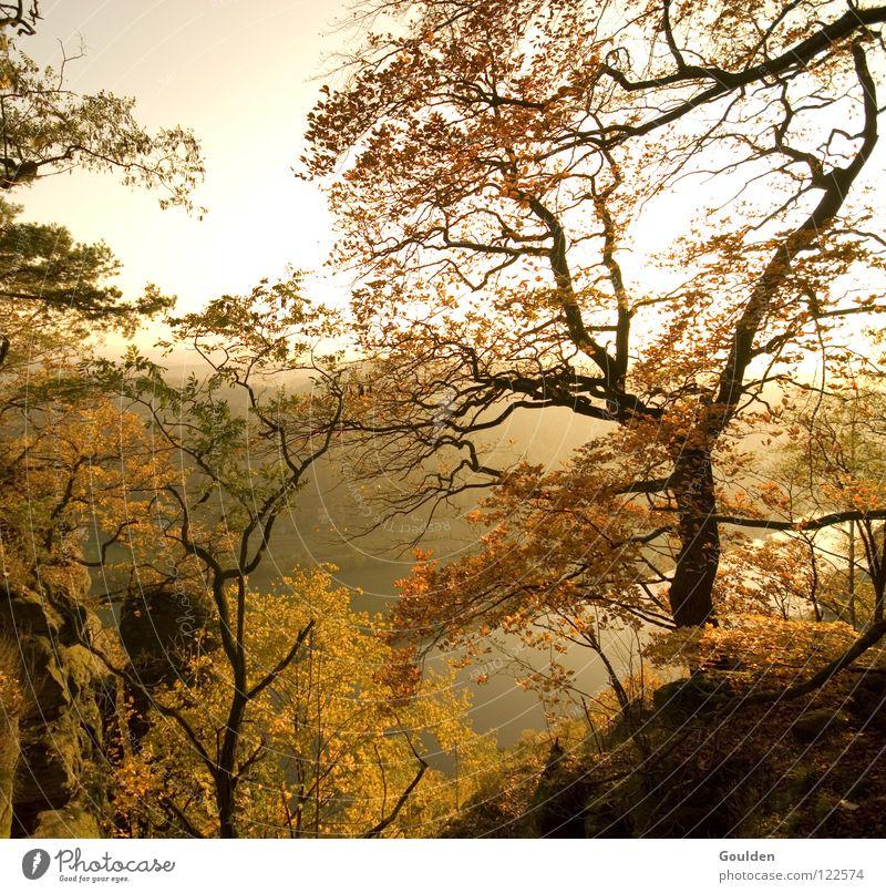 Herbst Baum Blatt Bastei braun Stimmung Jahreszeiten rot gelb Ferien & Urlaub & Reisen Erholung Elbe Caspar David Friedrich Elbtal gold Natur Kitsch Ausflug