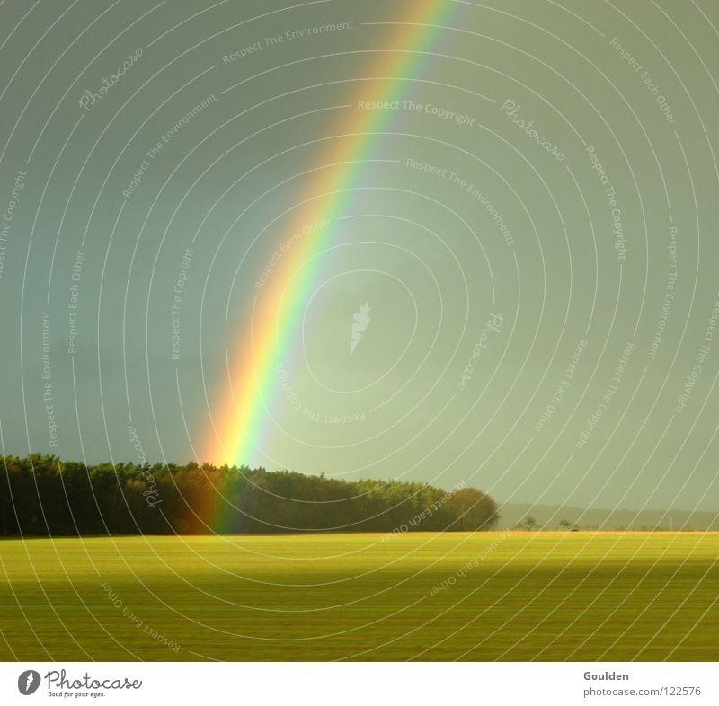 0815 Regenbogen Feld Raps Wald ökologisch Götter Religion & Glaube Hoffnung Frieden Landschaft Wetter Ferne Natur Bioprodukte Ökofeld Kitsch
