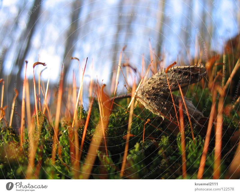 Waldspaziergang Baum Frühling grün weich Stengel Buchecker Himmel Spaziergang Kreis Paderborn Haxtergrund Unschärfe Sonne Wärme