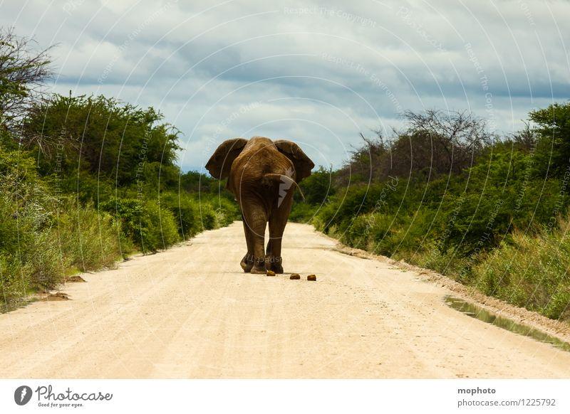 Drauf geschissen... Ferien & Urlaub & Reisen Tourismus Ferne Safari Natur Landschaft Tier Wolken Savanne Etoscha-Pfanne Afrika Straße Wege & Pfade Wildtier Zoo