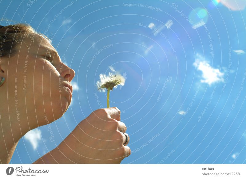 Pusteblume Frau Himmel Blume Perspektive