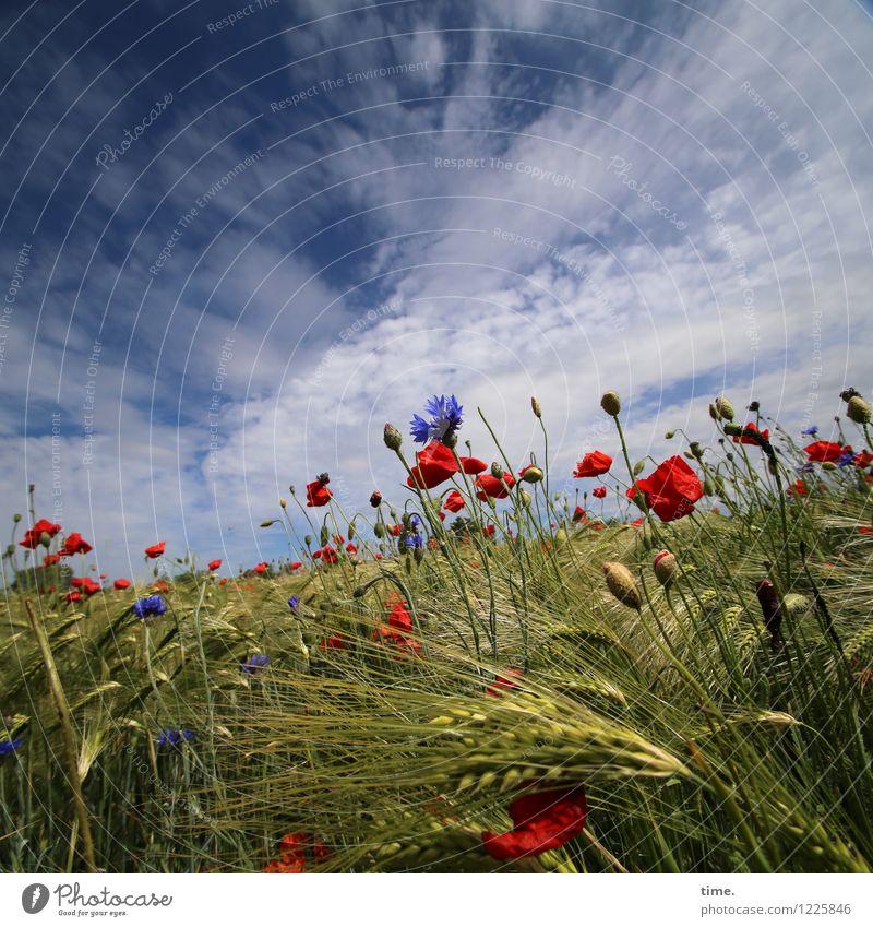 Spreedorado | Bauernmalerei Himmel Natur Pflanze Wolken Umwelt Leben Blüte Gras Lebensmittel Freundschaft Horizont Feld Wachstum Kraft ästhetisch Lebensfreude