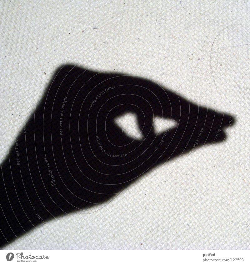 Schattenspiele II Hand weiß schwarz Tier dunkel Spielen Hund hell Finger Wolf