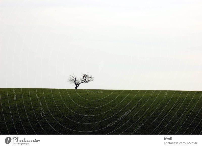 solitude Baum Zweige u. Äste Geäst Einsamkeit karg einfach simpel reduziert sehr wenige trist Silhouette Feld Streifen Linie Spuren Wege & Pfade gepflügt