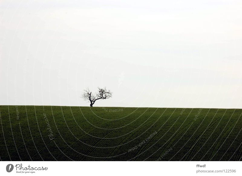 solitude Natur Himmel weiß Baum grün Winter Einsamkeit Wiese Gras Freiheit Wege & Pfade Landschaft Linie hell Feld frei