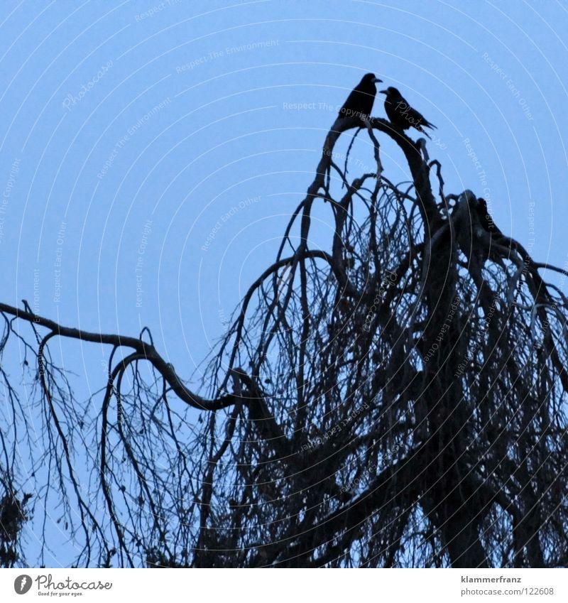 Die Liebe Himmel weiß Baum Wolken Blatt Winter schwarz Wald kalt grau Wärme Park Vogel Zusammensein Tierpaar